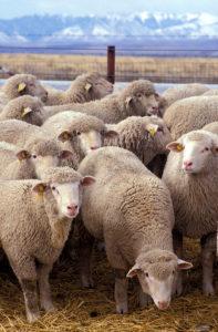 Animals should be vaccinated, not humans 【Japan Broadcasting.net Corporation Editorial】Sheepdog Samurai Yujiro Taniyama  ( ^ω^ )